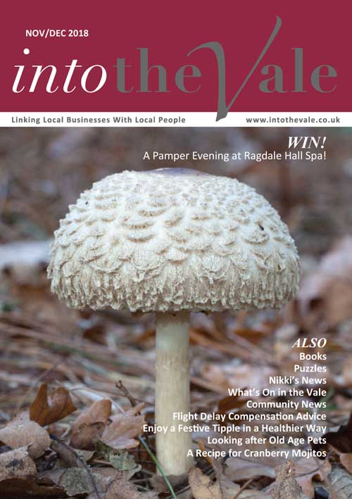 Into the Vale Nov/Dec 2018 Issue